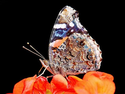 http://www.salem-bash.ir/?gallery=ax